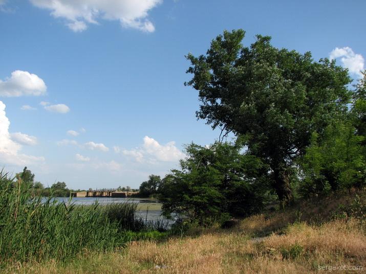 Дворец Куриса. Дерево у пруда.